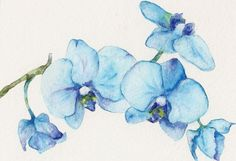 Blue+Orchids+One++Art+Print+of+watercolor+painting+8x10+by+Goosi