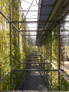 A Vertical Park in Zurich Greens Up the Grid Feauting plant (Ampelopsis…