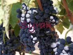Τα 7 αγαπημένα μας Ελληνικά Syrah