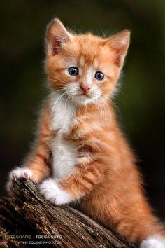Ginger kitten #evil #Bad #NSFW