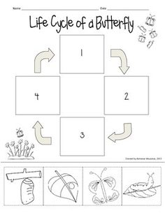 Here's a cute freebie to use with your butterfly life cycle unit! There's no reading involved, so it's suitable for a variety of grades/abilities. Simply cut the pictures and paste in order to sequence the butterfly's life cycle.This will be part of a larger butterfly life cycle packet.