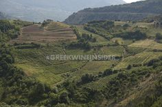 Katogi Averoff Vineyards, Metsovo, Greece