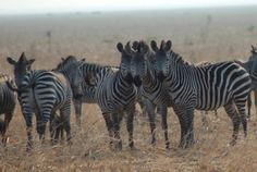 Researchers tested five hypothesis about why zebras have stripes—one came out the clear winner. Which one and why? Science Today has the answers.