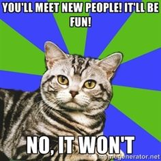 insecure about your introversion discover introvert cat; proud of your introversion - Introvert Cat Quotes Thoughts, Life Quotes Love, Introvert Cat, Introvert Quotes, Extroverted Introvert, Introvert Quiz, Infp Quotes, Nerd Quotes, Pain Quotes