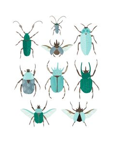 Art Print - Beetle Identification Chart (Blue).  Etsy.