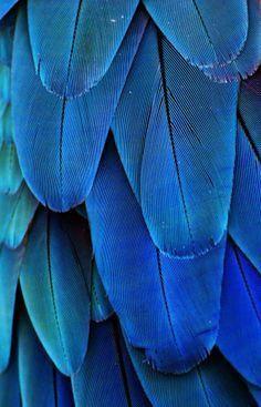 blue aesthetic cerulean and egyptian blue Wunderschne Farbpalette Foto Macro, Cyan, Fotografia Macro, Himmelblau, Cerulean, Cobalt Blue, Blue Green, Periwinkle Blue, Aqua Blue