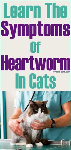 Learn The Symptoms Of Heartworm in Cats Funny Animal Videos, Funny Animals, Cute Animals, Beautiful Cats, Animals Beautiful, Dog Pin, Funny Cute, Animal Pictures, Your Pet