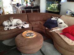 Home - Greyhound Adoption Center Adoption Center, Greyhounds, Bean Bag Chair, New Homes, Furniture, Home Decor, Decoration Home, Room Decor, Beanbag Chair