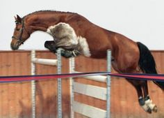 1000+ images about Equine Color: Somatic Mutation on ...