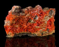 A specimen of CROCOITE from the  2010 Pocket opened in Dec 2010 at the Adelaide Mine in Dundas, Zeehan, Tasmania, Australia. Found at the Tucson Gem, Rock & Mineral Show