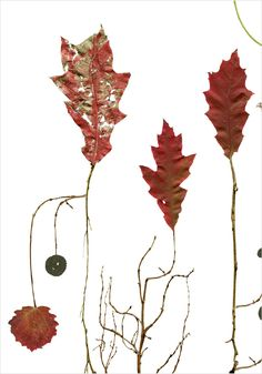 Oak Tree / Eken - Lottas Träd/ Lottas Trees