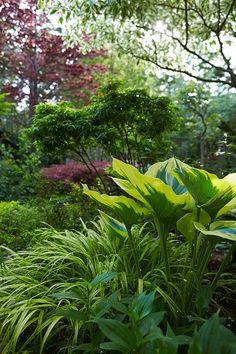 Hostas liriope Japanese maples Marjorie Harris Toronto garden ; Gardenista