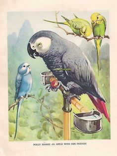 Parakeets Budgerigar Parrot 1930s Childrens Vintage Art Print AE Kennedy | eBay