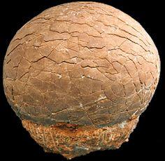 Dinosaur, Crystals, Minerals, Fossils, Feng Shui, Meteorites, Metaphysical, Rock, Quartz