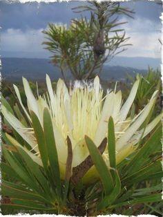 x Beautiful World, Natural Beauty, Nature, Plants, Naturaleza, Plant, Nature Illustration, Off Grid, Raw Beauty