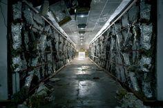 Las decadentes ruinas de la URSS, por Rebecca Litchfield - ALTFoto