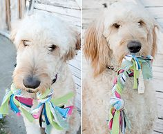 Easy Handmade Jersey Knit Dog Toy http://fabyoubliss.com/2012/02/15/easy-handmade-jersey-knit-dog-toy/