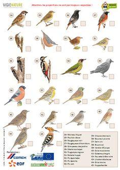 ficheLPO2 Animals For Kids, Animals And Pets, Bird Drawings, Woodland Party, Bird Watching, Have Fun, Birds, Poster, Recherche Google
