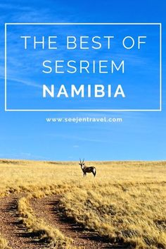 Why Namib Desert Lodge is the best place to stay in Sesriem, Namibia.  Click through to read the full post!