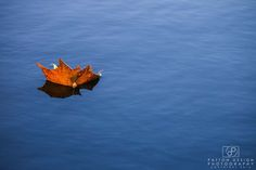November 24 - Leaf on the Water http://www.pattondesignphotography.com