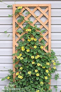 I love things growing on lattice!