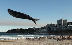 A Life-Sized, Realistic-Looking Blue Whale Kite