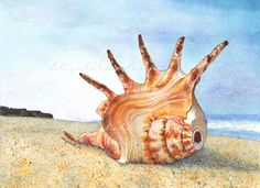Conch Shell  Watercolor Giclee by sgiuliani on Etsy, $133.95