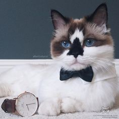 "From @albertbabycat: ""The name is Babycat, Albertbabycat."" #twitterweek #catsofinstagram"