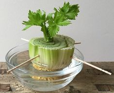 """Don't Toss That Celery! Regrow It Instead I """"Want to try your hand at growing some of your own food? You can start with something as simple as giving new life to an everyday kitchen scrap. Here, I'll show you how easy it is to regrow celery from the root Growing Plants Indoors, Growing Veggies, Regrow Green Onions, How To Regrow Celery, Celery Plant, Regrow Vegetables, Fresh Green, Passover Desserts, Vegetable Garden"""
