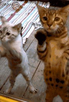 Cuidado estos gatos saben karate