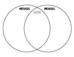 91 best mitosis and meiosis images on pinterest life science free venn diagram to compare and contrast mitosis and meiosis students can immediately see similarities ccuart Image collections
