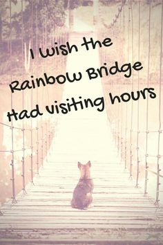 For all the animal lovers out there who miss their beloved pet who has passed away...