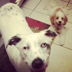 Yes, we want treats...