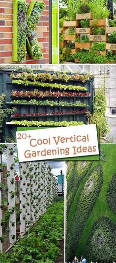 All these cool vertical gardening ideas allow plants to extend upward rather than grow along the surface of the garden.
