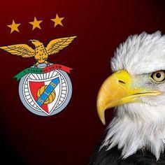 SPORT LISBOA E BENFICA Benfica Wallpaper, Image Fun, Club, Portuguese, Eagles, Bald Eagle, Victorious, Team Logo, Sky
