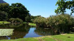 Kirstenbosch South Africa, River, Garden, Outdoor, Outdoors, Garten, Gardens, Outdoor Living, Tuin