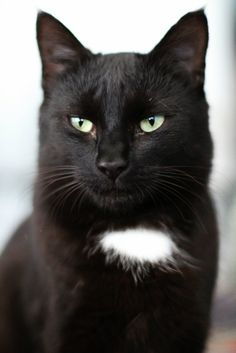 I like black cats. Doesn't this one look so wise?