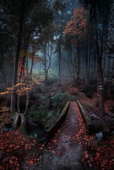 """opticcultvre: """" Enchanted forest by Emil Rashkovski """""""