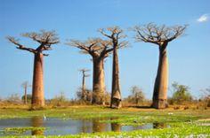MADAGASKAR REISEN - Rundreisen - Urlaub - Gruppenreisen - Individualreisen