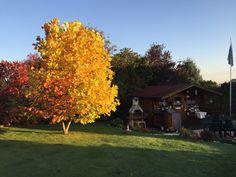 Tulpenbaum und Gartenhaus