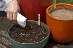 Winter sowing seeds | Living the Country Life