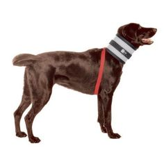 BiteNot Collar -- You can find more details by visiting the image link. (This is an Amazon affiliate link)