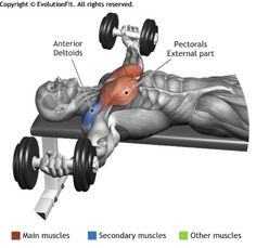 "DUMBBELL FLYES - The exercise is fit for the definition of the chest, it involves the lower part of the muscle giving the classic ""round"" form. Fitness Workouts, Fitness Motivation, Fitness Gym, Muscle Fitness, Mens Fitness, At Home Workouts, Health Fitness, Academia Fitness, Muscle Anatomy"