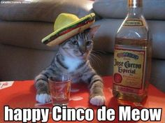 tequila makes her clothes fall off. For some reason must always sing this song while drinking tequila Funny Cats, Funny Animals, Funny Jokes, Hilarious, Funny Drunk, Drunk Humor, Silly Cats, Funny Captions, Farts Funny