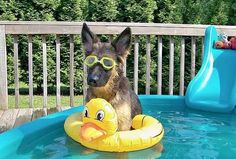 Doggy Newsletter - Doggies and Water - From A Place To Love Dogs Cute Puppies, Cute Dogs, Dogs And Puppies, Doggies, Funny Dogs, Funny Animals, Cute Animals, Wild Animals, Dog Pictures