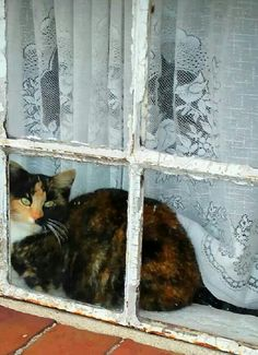 Katze in Ostfriesland