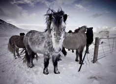 Horses, Chilling