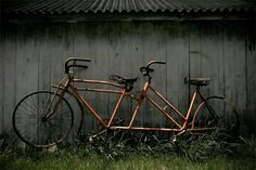 Daisey, Daisey, tell me your answer true...but you'd look sweet upon the seat of a bicycle built for two!