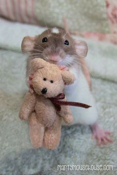 Bean and his teddy