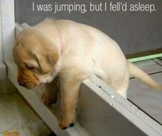 Cute & Funny puppy. For more funny dog pics visit www.bestfunnyjokes4u.com/funny-dog-pics/
